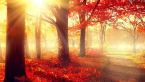weerstand herfst acupunctuur